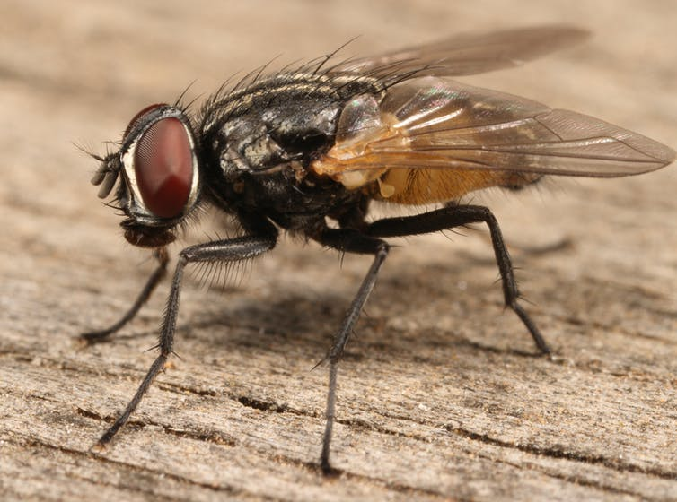 Is it safe to eat food a fly landed on?