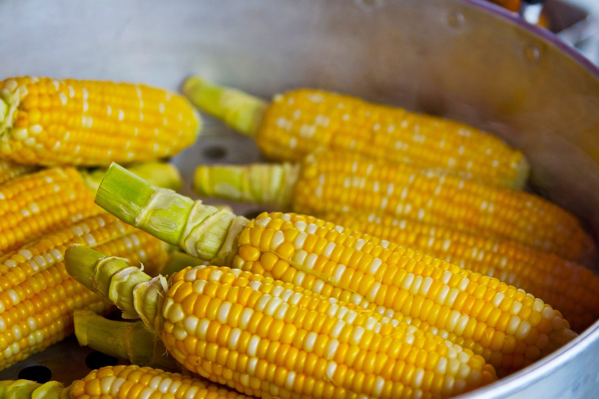 Corn causes rare food allergies