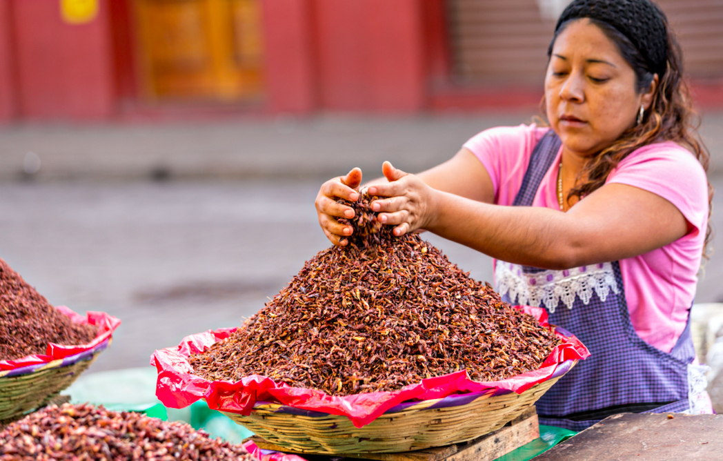Chapulines snack Oaxaca