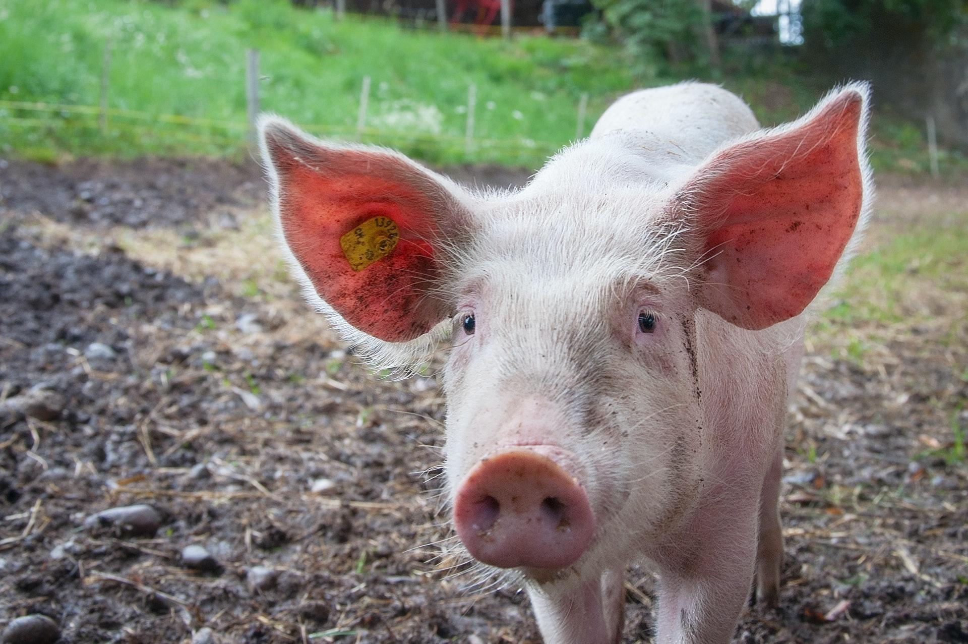 how to prepare pork