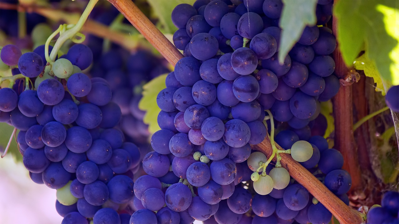 Grapes symbolise the months of the year (Credit: Pixabay)