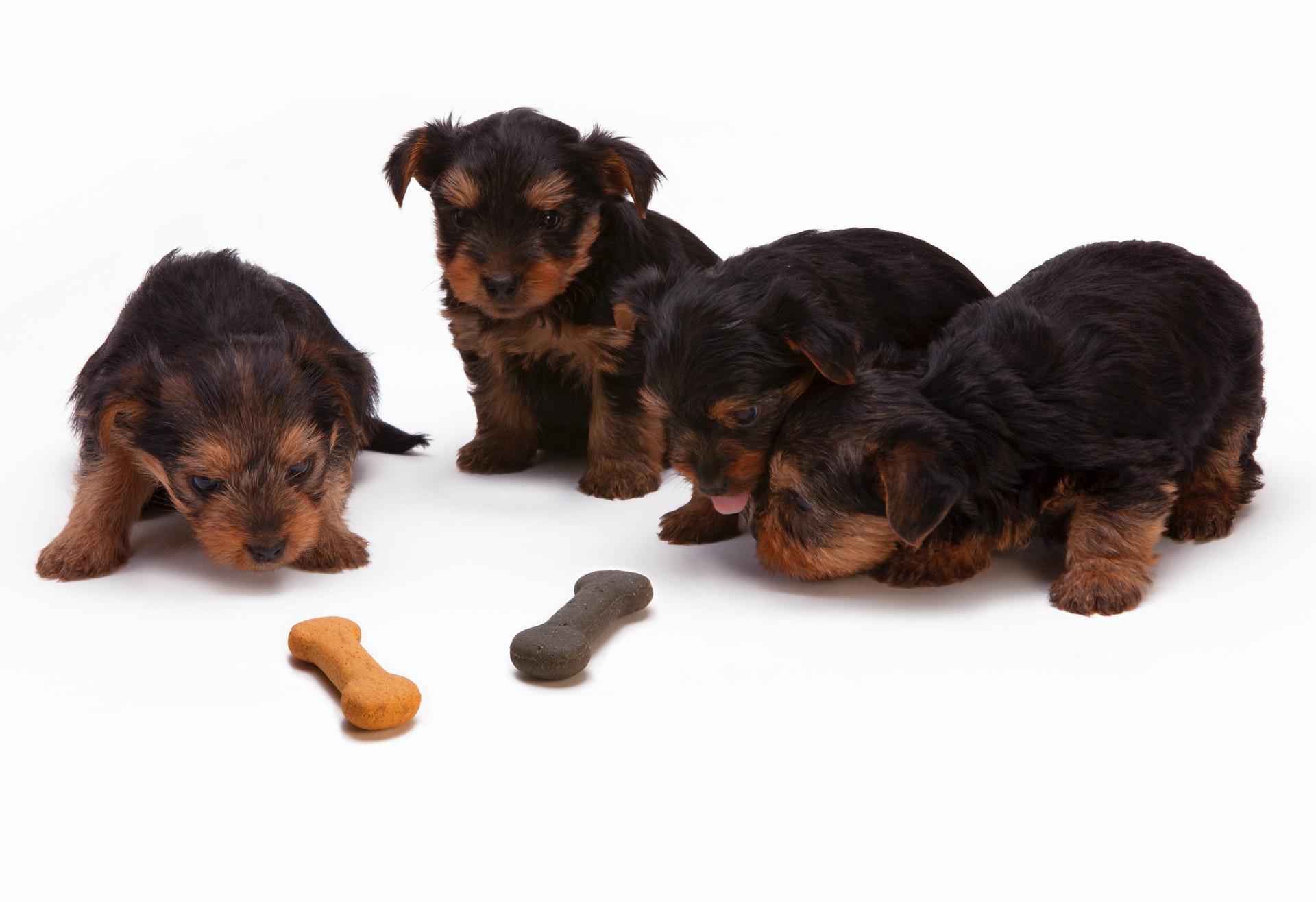 Dog food critic