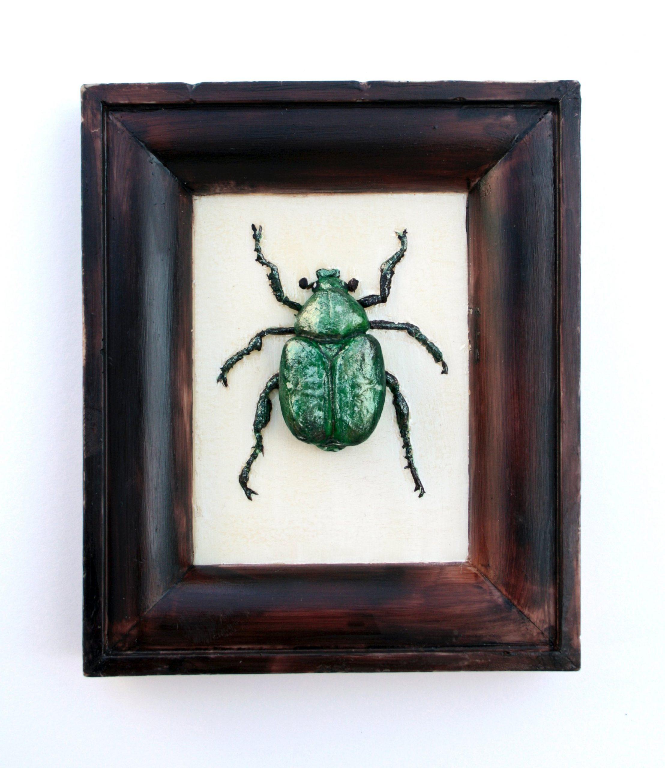 Chocolate Beetle