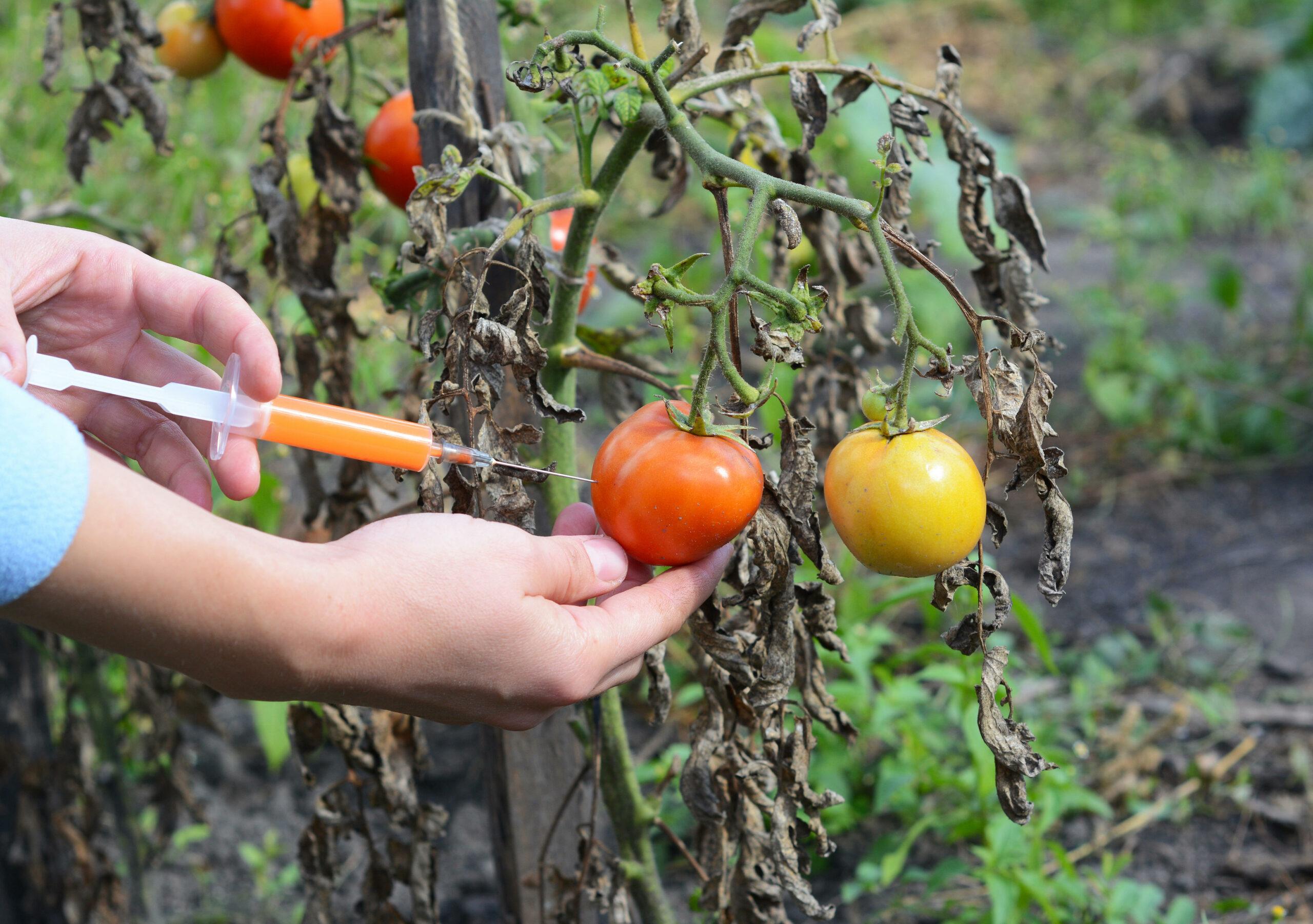 GM Food future